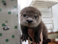 So you said you love Otters