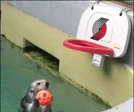 The dunking Otter