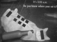 It's 3:00 a.m. Do you know where your cat is?