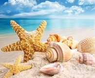 Pretty Shells & Starfish on the Beach