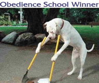 Obedience school winner