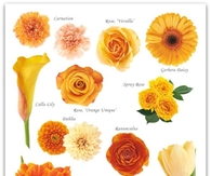 Orange and Peach Flower Guide