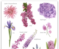 Blue and Violet Flower Guide