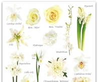 White Flower Guide