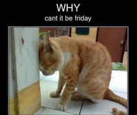 Why can't it be friday