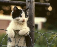 Cute Kitten Standing Up