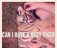 Can I Have A Baby Tiger