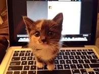 Kitty Needs Attention