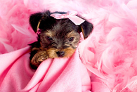 Sweet Little Puppy in Pink