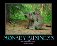 Monkey buisiness