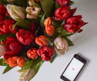 Tulip bouquet