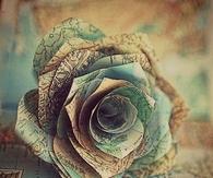 Rose map