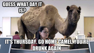 Its Thursday Hump Day Camel