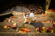 Cat on the steps
