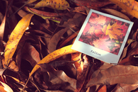 Autumn polaroid