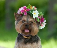 Cute Doggy with Flower Garland
