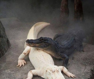 Black & White (Albino) Alligators