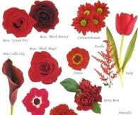 Flower Guide