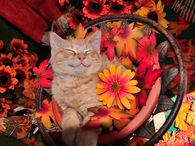Cat Happy for Fall