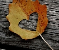 Heart cut out of a leaf