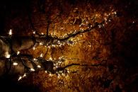 Autumn Tree Lights