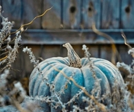 Blue Pumpkin