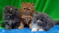 3 Adorable Kittens