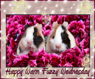 Have a warm fuzzy Wednesday