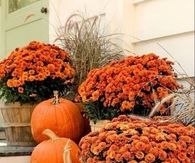 Mums and pumpkins on the porch