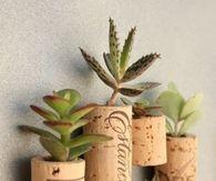 Tiny succulent cork planters