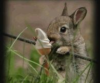 Cute bunny having a nice cream!