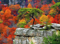 Autumn Shades..Just Beautiful