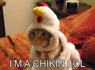 I'm a chikin LOL