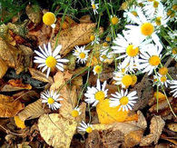 Hello Fall n Good bye Summer