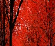 Red Autumn on a Winding Road