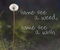 Some See