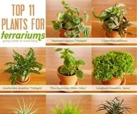Top 11 Plants for Terrariums