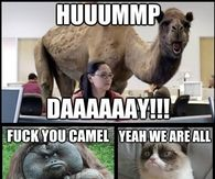 Hump Day Camel Meme War