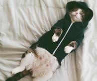 Sleeping Cat in A Hoodie