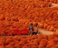 Fall Hitachi Seaside Park - Japan