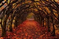 Fall Tunnel