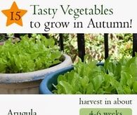 15 Vegetables To Grow In Autumn