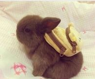 Bunny wearing a backpack