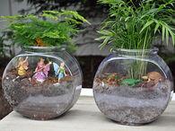 Fish bowl terrariums