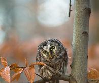 Cute Owl in the Fall