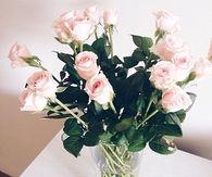 White Pink Roses