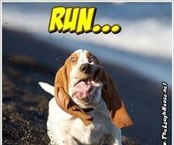 Run monday is coming