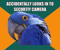 Paranoid Parrot Memes