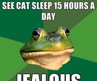 See cat sleep 15 hours a day....jealous