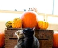 Autumn Cats on a Pumpkin
